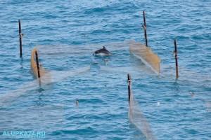 Рыбаки помогли выбраться заплывшему в рыболовные сети дельфину