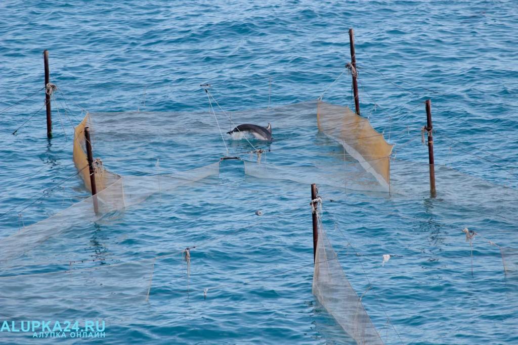 Рыбаки помогли выбраться заплывшему в рыболовные сети дельфину 2
