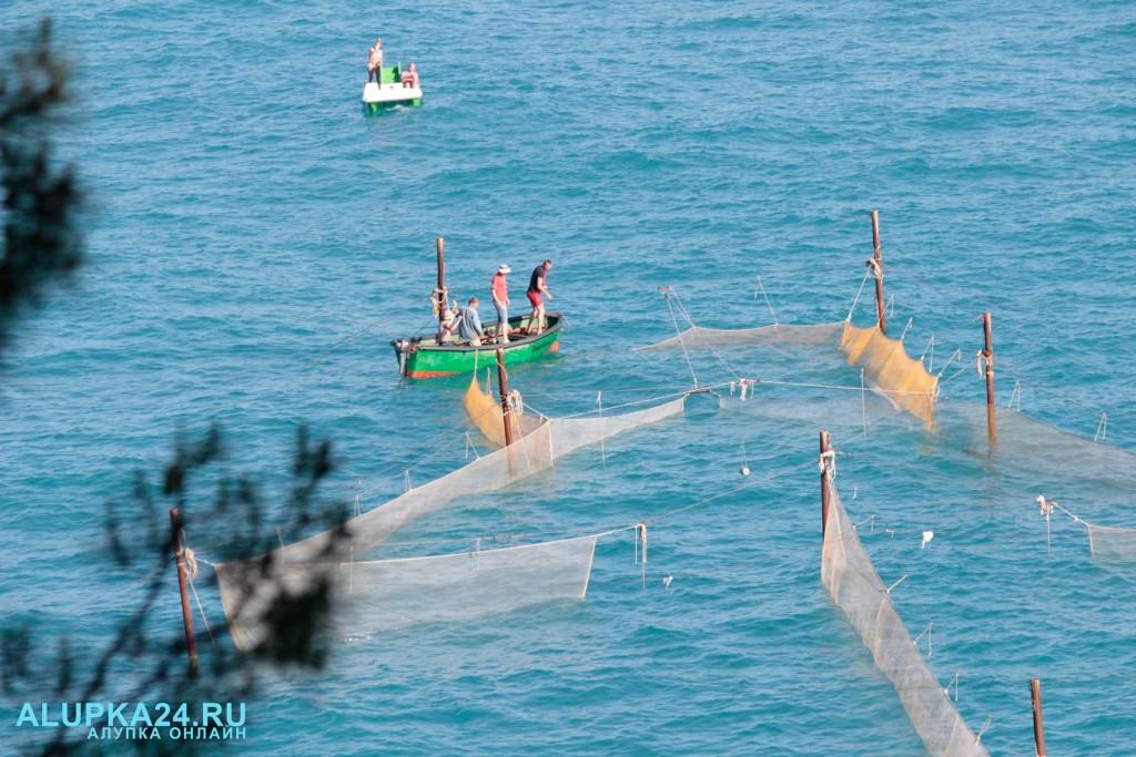Рыбаки помогли выбраться заплывшему в рыболовные сети дельфину 3