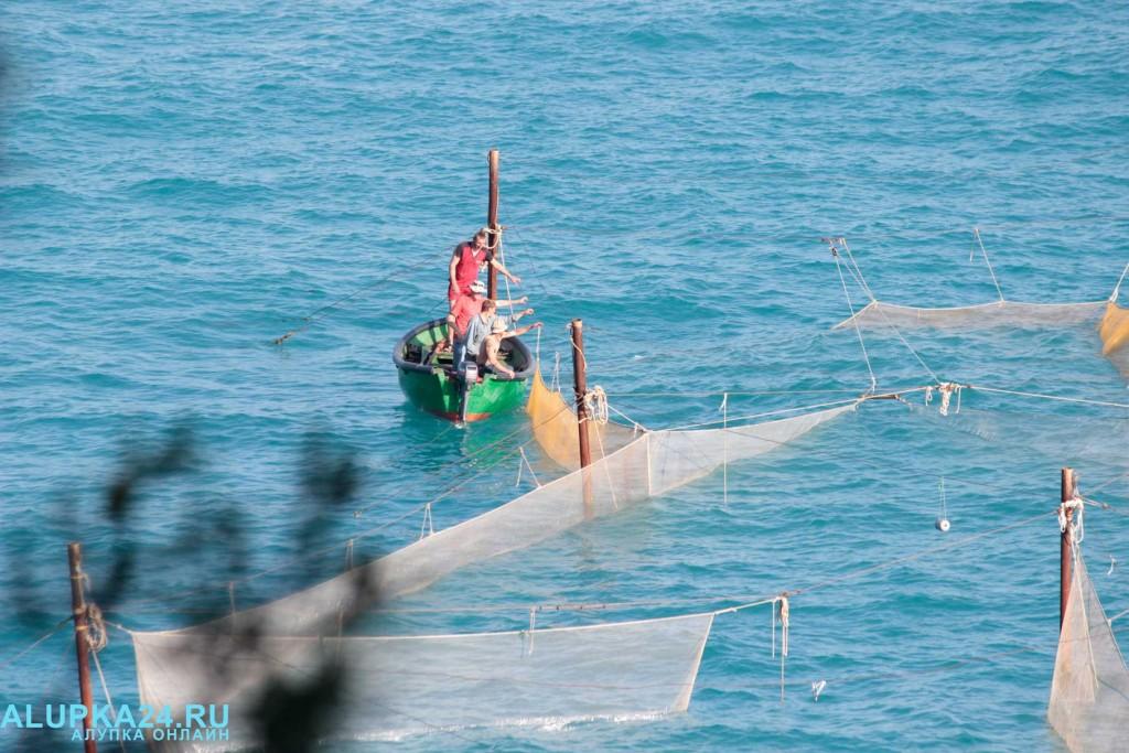 Рыбаки помогли выбраться заплывшему в рыболовные сети дельфину 4