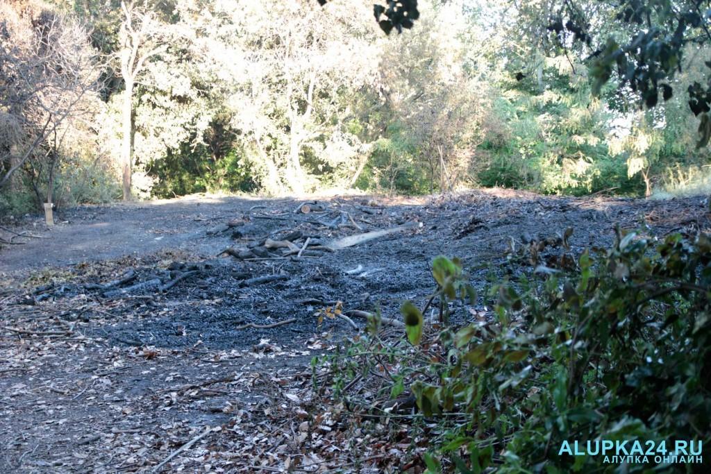 В Воронцовском парке горел отвал листьев 4