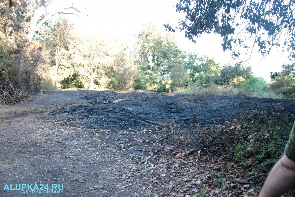 В Воронцовском парке горел отвал листьев 3