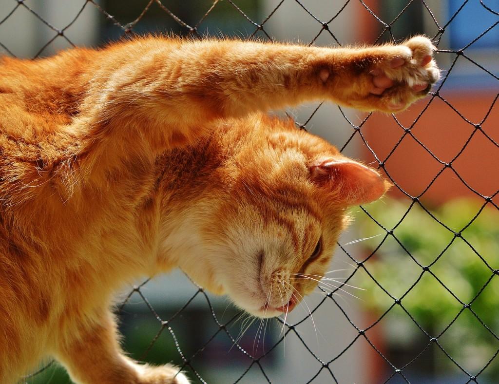 Четверть россиян готовы поступиться отпуском ради кота