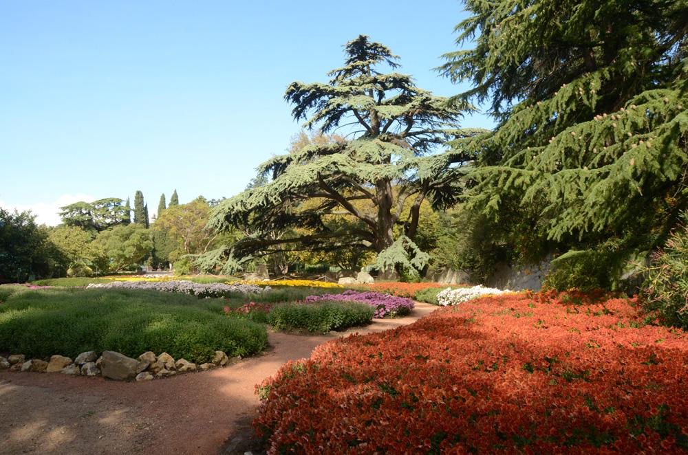 Бал хризантем в Никитском ботаническом саду 2017 11