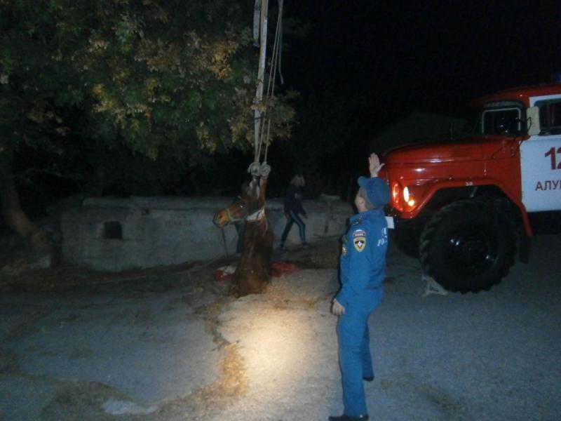 В Ялте из канализационного люка достали провалившуюся лошадь 2