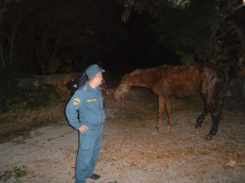 В Ялте из канализационного люка достали провалившуюся лошадь 1