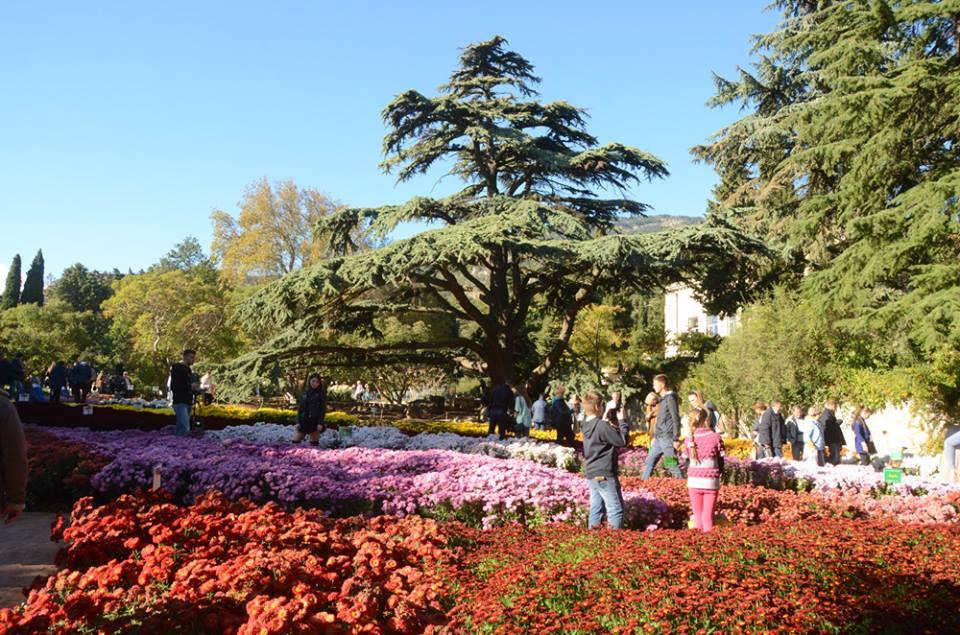 Бал хризантем в Никитском ботаническом саду 2017 2