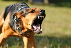 В Ялте завелась стая собак-убийц