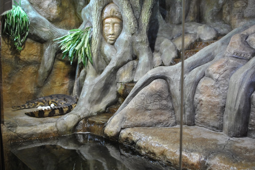 Гавиалы, обитающие в Ялтинском крокодиляриуме, принесли потомство 3