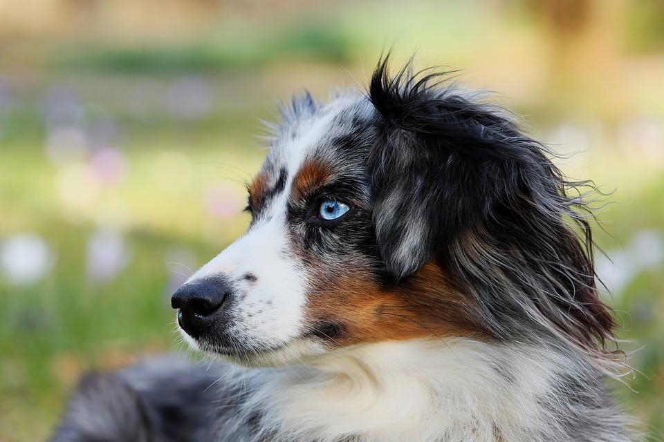 В Ялте займутся стерилизацией бездомных собак