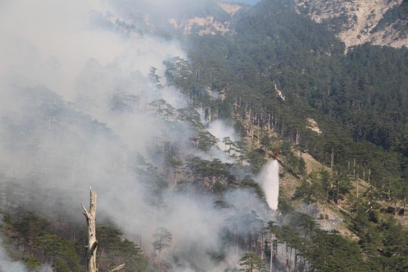 В Ялте третий день тушат лесной пожар (Фото: пресс-служба МЧС)